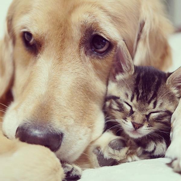 Xúc động với chùm ảnh tình bạn của chú chó với mèo con bị bỏ rơi