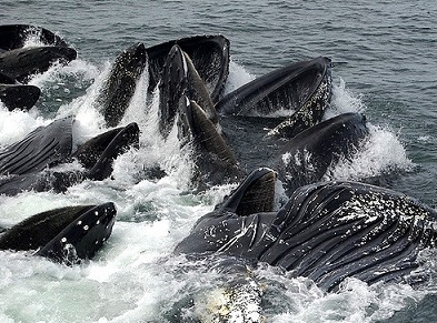 know-about-humpback-whale-facts-and-migration