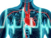 दिल धड़कन तेज होने का कारण और आयुर्वेदिक इलाज, dil ki dhadkan tez hone ka karan aur ayurvedic ilaj