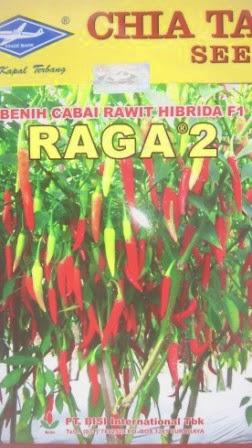 benih petani,tahan virus, buah lebat, cap panah merah, tahan layu, tahan cekaman calcium, Raga 2