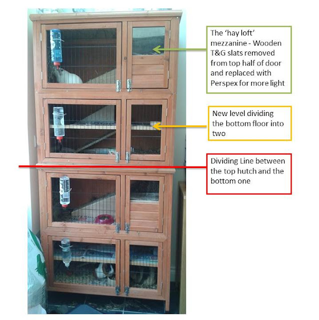 Guinea pig cage options outdoor hutches