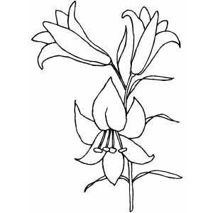 Dibujo Flor Jazmin Para Colorear Imagesacolorierwebsite