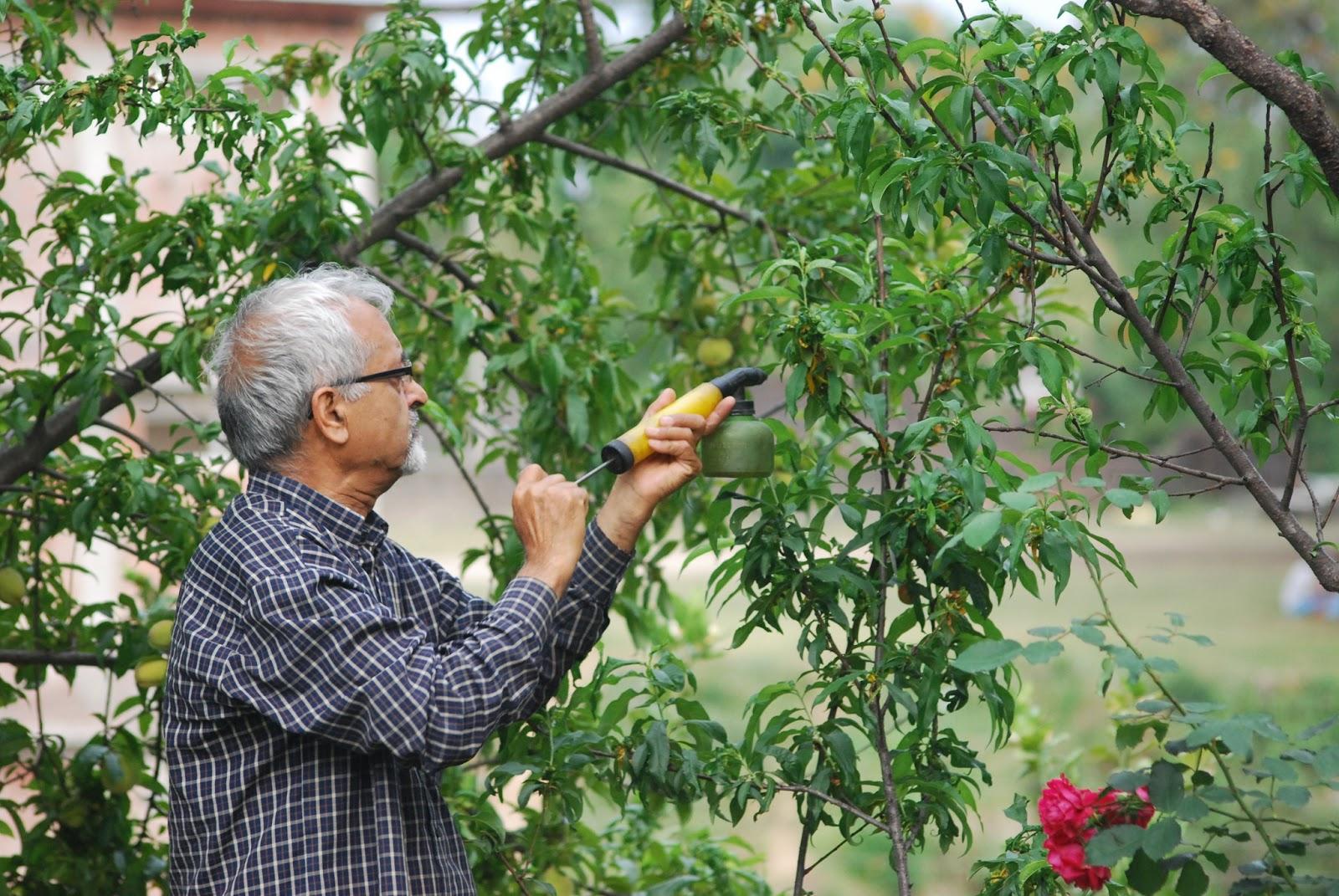 Time Traveling Gardener Algorithm Problem