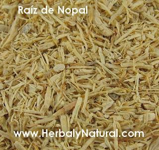 Raíz de Nopal