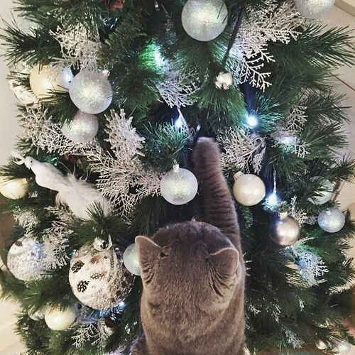 christmas cat friendly decorating tips