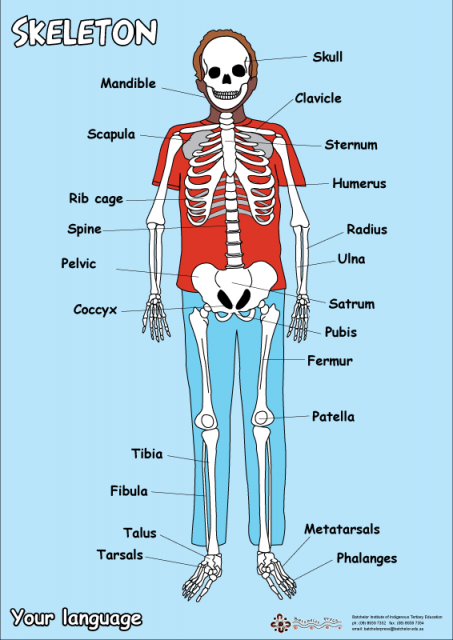 Cross Curricular Physical Education: Skeleton Macarena