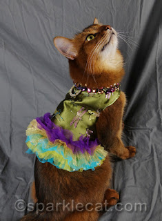 Summer Samba, the famous Somali cat, posing for photos at BlogPaws