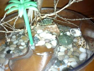 tortugas-de-agua-trachemys-scripta-como-cuidar-de-ellas