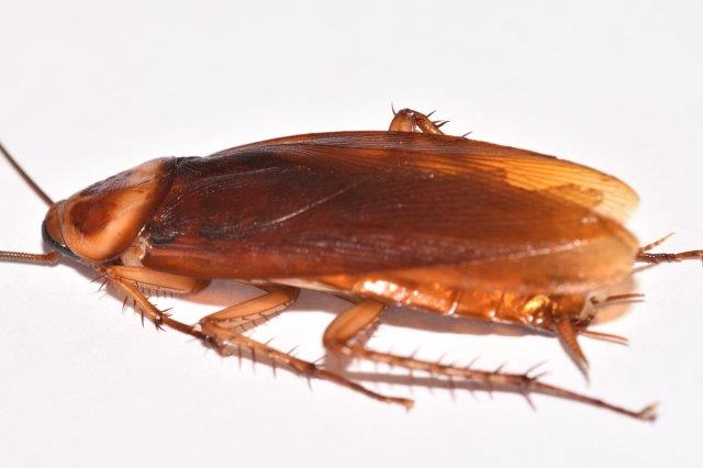 for-teens-what-does-a-cockroach-look-like-ameture-panty