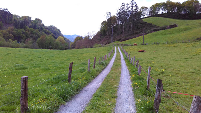 Fin sendero Río La Marea - Piloña - Asturias