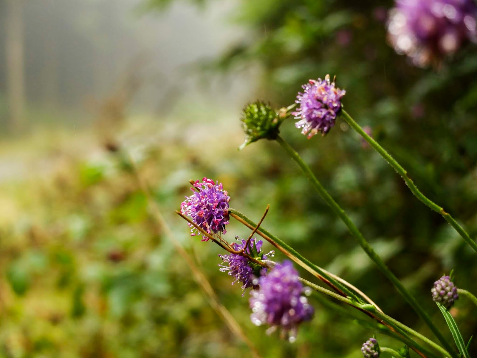Some purple wild flowers hanging over the edge of an embankment in the forest.