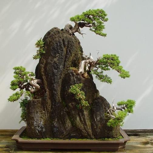 Bonsai - a apaixonante árvore anã