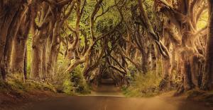 Description d'une forêt en français