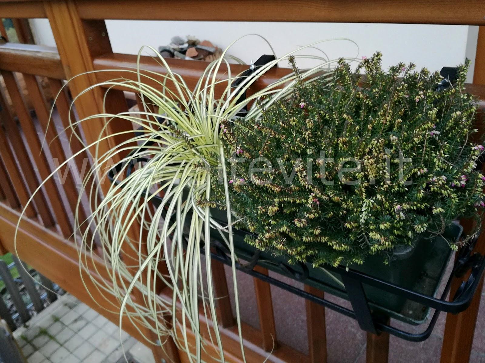 Composizione Vasi Da Balcone quali piante per il balcone invernale di montagna? | altevite