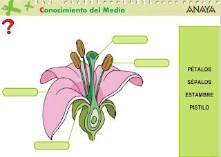 http://capitaneducacion.blogspot.com.es/2017/11/3-primaria-ciencias-de-la-naturaleza_62.html