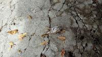 stradale ptice nevrijeme Postira slike otok Brač Online