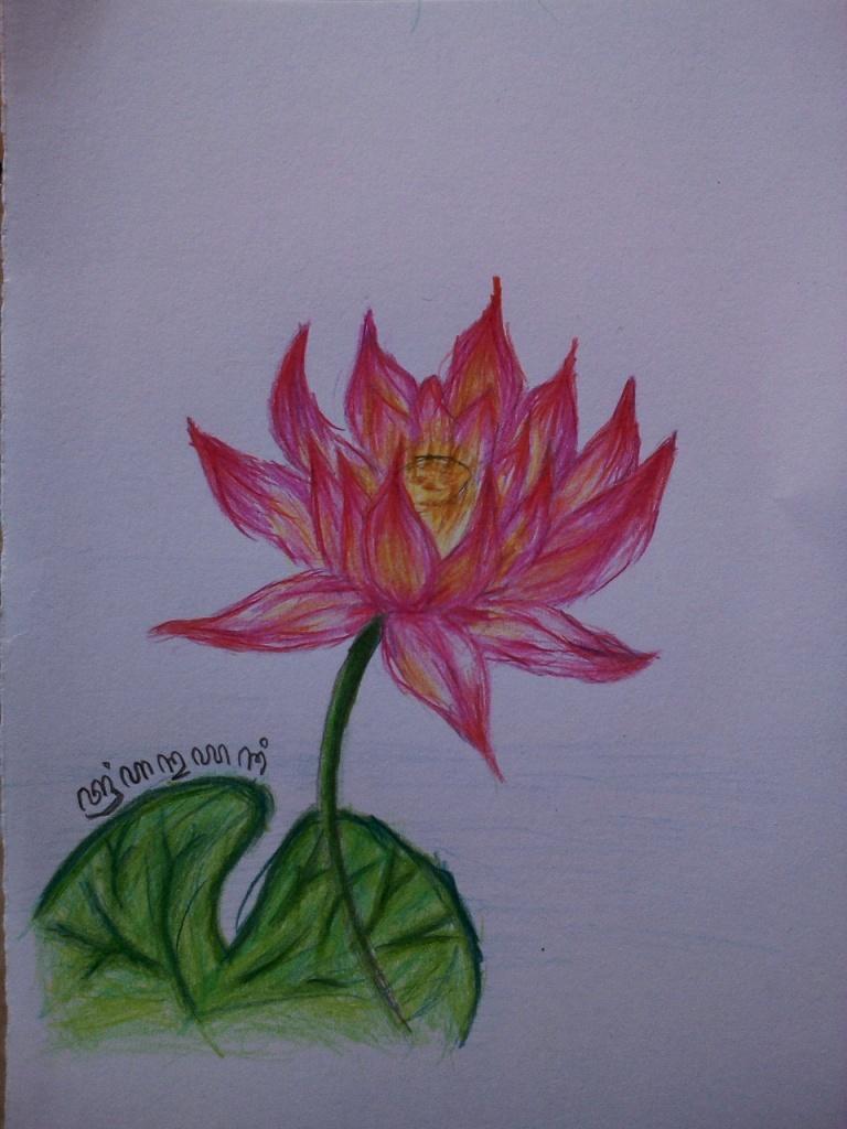 Sketsa Gambar Bunga Lotus Garlerisket