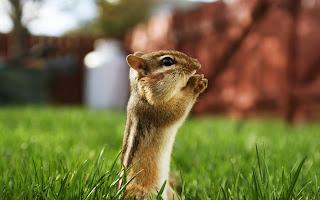 एक शिक्षाप्रद कहानी-गिलहरी की भक्ति