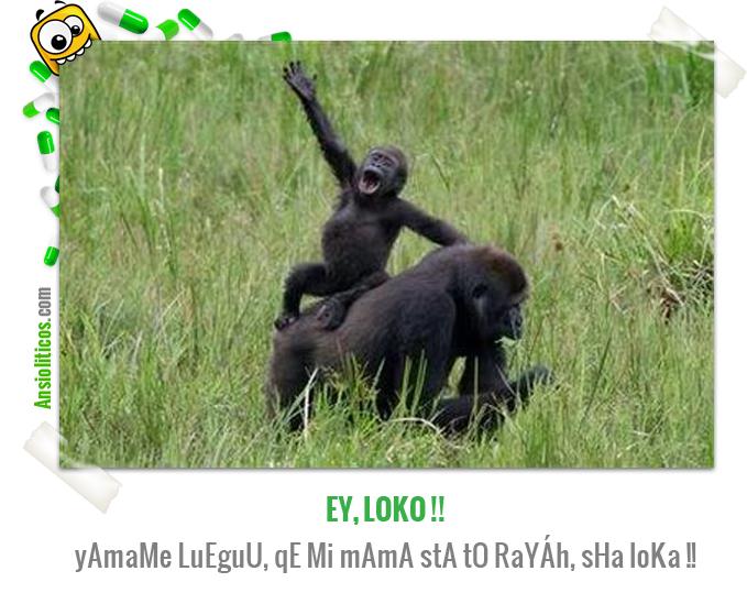 Chistes de Animales de un Bebé Gorila