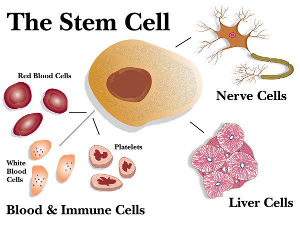 Stem cell Malaysia
