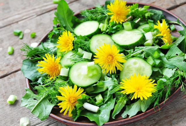 Дикие растения для еды