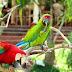 Contoh Recount Text tentang Liburan ke Bali Bird Park dan Artinya