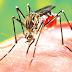 Dengue pode ter causado duas mortes no fim de semana em Maringá