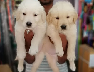 dogs for sale in bangalore