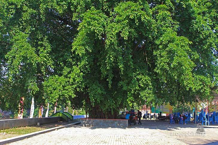 pohon beringin trembesi pekalongan
