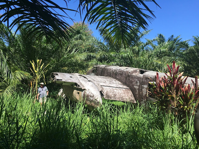 The B-25H is surrounded by jungle