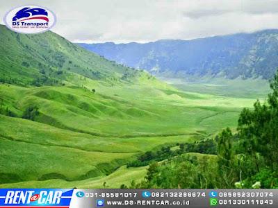 Sewa Mobil Untuk Berwisata di Gunung Bromo Probolinggo harga paket wisata gunung bromo lokasi gunung bromo Padang Savana Blogger