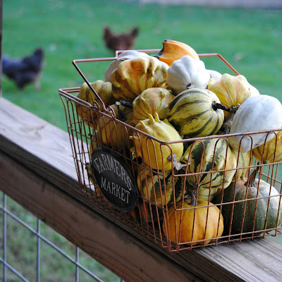 Gourd Harvest, shared by Stone Cottage Adventures at The Chicken Chick's Clever Chicks Blog Hop
