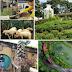 Lokasi Wisata Farm House Susu Lembang
