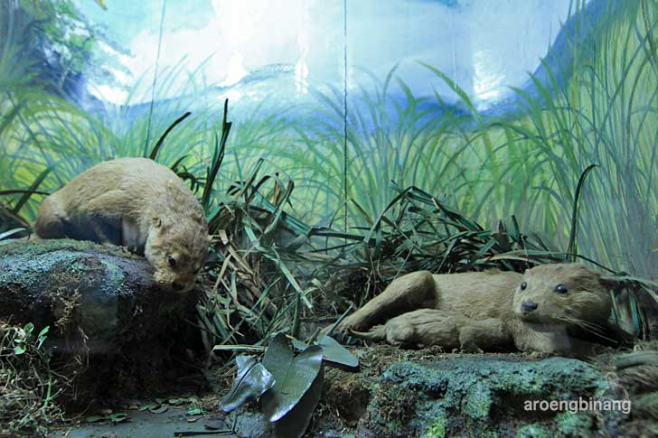 sero museum zoologi bogor