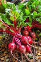 Betterave rouge pour une meilleure santé