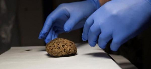 ΣΠΑΝΙΟ ΘΑΥΜΑ ΤΗΣ ΦΥΣΗΣ: Εκτελέστηκαν στον εμφύλιο, αλλά ο εγκέφαλός τους ήταν ακόμα «ζωντανός»!
