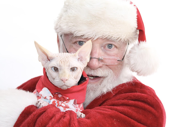 Santa Claus with Sphynx Cat  Moshe Moshi