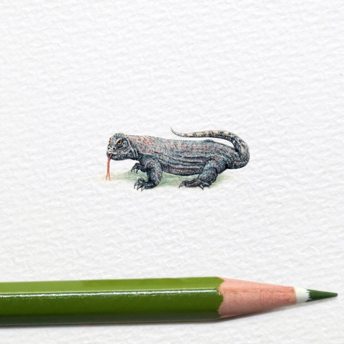 12-Komodo-Dragon-Frank Holzenburg Miniature Drawings and Paintings of Animals-www-designstack-co