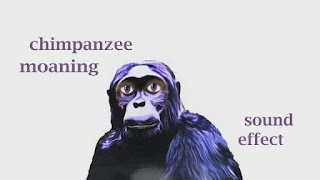 How Chimpanzee sounds