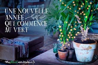 Coup de coeur : Opération Bye bye vieux sapin, Hello jolie plante ! par Ma plante, mon bonheur