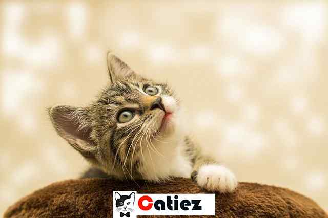 how to care for a newborn kitten without a mother