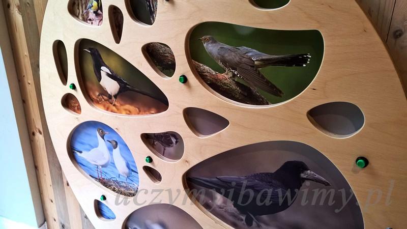 Odgłosy ptaków