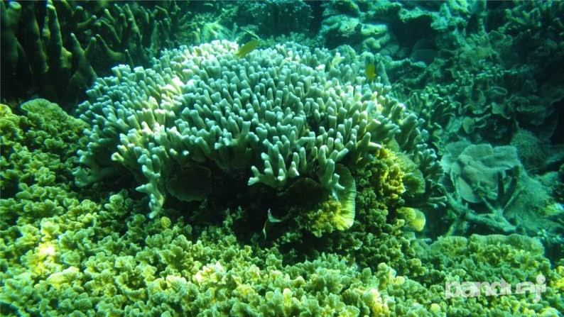 Terumbu Karang di Pulau Kecil Karimunjawa