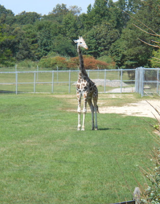 Cape May County Park & Zoo in New Jersey