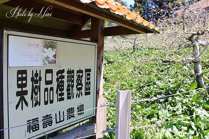 【台中市和平區】福壽山農場。觀星賞花露營渡假去