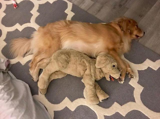 Chó cũng biết ghen