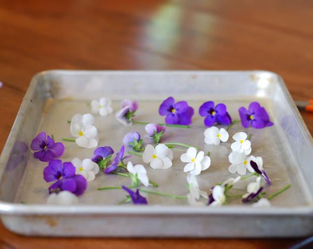 Marzipan Sugared Edible Flowers Cake Decorating