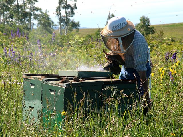 Οι μέλισσες με έσωσαν! Η από καρδιάς εξομολόγηση ενός συναδέλφου...