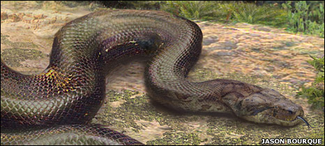 Biggest Snakes in the World - longest snake in the world ... - photo#24