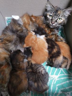 merawat bayi kucing